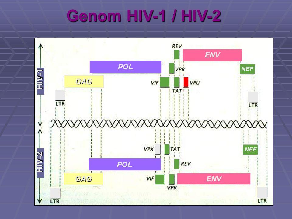 Genom HIV-1 / HIV-2 GAG GAG POL ENV HIV-1 HIV-2 NEF
