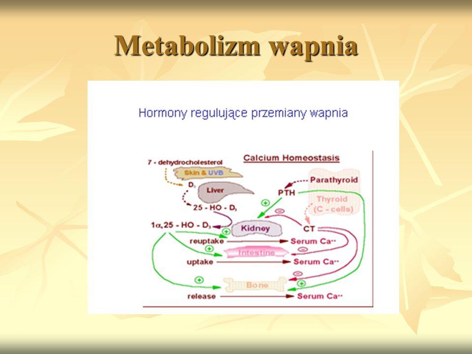 Metabolizm wapnia