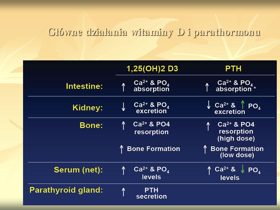 Główne działania witaminy D i parathormonu