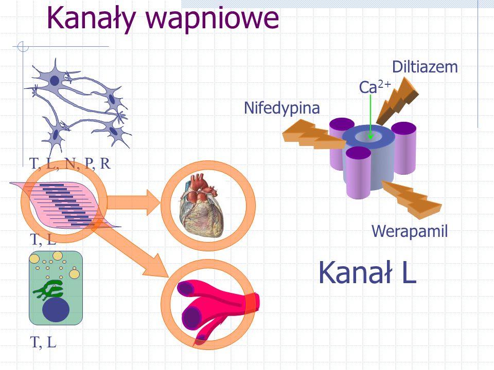 Kanały wapniowe T, L, N, P, R T, L Kanał L Werapamil Nifedypina Diltiazem Ca 2+