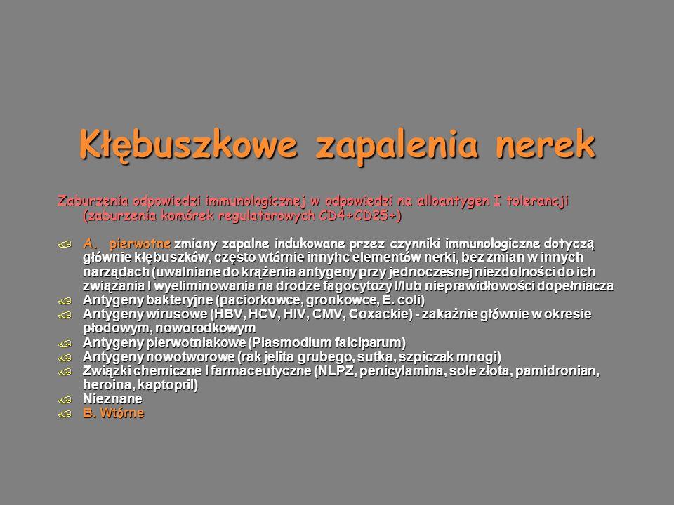 K łę buszkowe zapalenia nerek Zaburzenia odpowiedzi immunologicznej w odpowiedzi na alloantygen I tolerancji (zaburzenia komórek regulatorowych CD4+CD25+)  A.