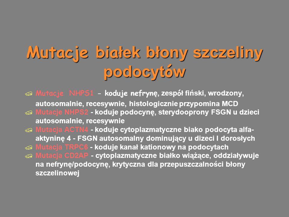 Mutacje bia łek błony szczeliny podocyt ó w  Mutacje NHPS1 - koduje nefryn ę, zesp ó ł fiński, wrodzony, autosomalnie, recesywnie, histologicznie przypomina MCD  Mutacje NHPS2 - koduje podocynę, sterydooprony FSGN u dzieci autosomalnie, recesywnie  Mutacja ACTN4 - koduje cytoplazmatyczne biako podocyta alfa- aktyninę 4 - FSGN autosomalny dominujący u dizeci I dorosłych  Mutacja TRPC6 - koduje kanał kationowy na podocytach  Mutacja CD2AP - cytoplazmatyczne białko wiążące, oddziaływuje na nefrynę/podocynę, krytyczna dla przepuszczalności błony szczelinowej  Mutacje NHPS1 - koduje nefryn ę, zesp ó ł fiński, wrodzony, autosomalnie, recesywnie, histologicznie przypomina MCD  Mutacje NHPS2 - koduje podocynę, sterydooprony FSGN u dzieci autosomalnie, recesywnie  Mutacja ACTN4 - koduje cytoplazmatyczne biako podocyta alfa- aktyninę 4 - FSGN autosomalny dominujący u dizeci I dorosłych  Mutacja TRPC6 - koduje kanał kationowy na podocytach  Mutacja CD2AP - cytoplazmatyczne białko wiążące, oddziaływuje na nefrynę/podocynę, krytyczna dla przepuszczalności błony szczelinowej