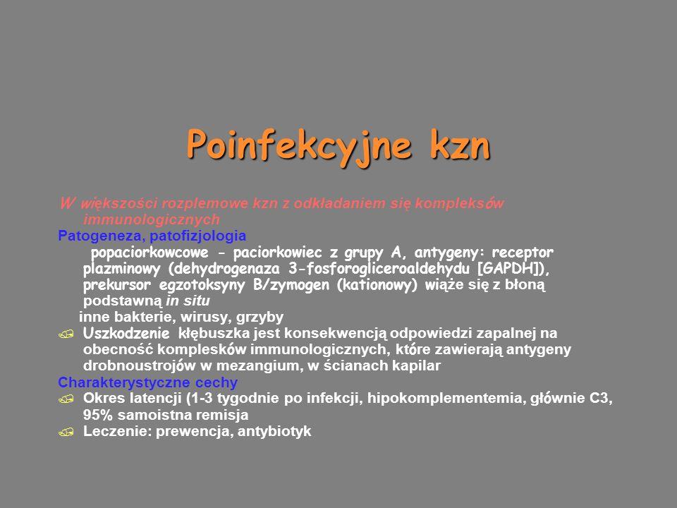 Poinfekcyjne kzn W wi ększości rozplemowe kzn z odkładaniem się kompleks ó w immunologicznych Patogeneza, patofizjologia popaciorkowcowe - paciorkowiec z grupy A, antygeny: receptor plazminowy (dehydrogenaza 3-fosforogliceroaldehydu [GAPDH]), prekursor egzotoksyny B/zymogen (kationowy) wi ąże się z błoną podstawną in situ inne bakterie, wirusy, grzyby  Uszkodzenie k łębuszka jest konsekwencją odpowiedzi zapalnej na obecność komplesk ó w immunologicznych, kt ó re zawierają antygeny drobnoustroj ó w w mezangium, w ścianach kapilar Charakterystyczne cechy  Okres latencji (1-3 tygodnie po infekcji, hipokomplementemia, gł ó wnie C3, 95% samoistna remisja  Leczenie: prewencja, antybiotyk W wi ększości rozplemowe kzn z odkładaniem się kompleks ó w immunologicznych Patogeneza, patofizjologia popaciorkowcowe - paciorkowiec z grupy A, antygeny: receptor plazminowy (dehydrogenaza 3-fosforogliceroaldehydu [GAPDH]), prekursor egzotoksyny B/zymogen (kationowy) wi ąże się z błoną podstawną in situ inne bakterie, wirusy, grzyby  Uszkodzenie k łębuszka jest konsekwencją odpowiedzi zapalnej na obecność komplesk ó w immunologicznych, kt ó re zawierają antygeny drobnoustroj ó w w mezangium, w ścianach kapilar Charakterystyczne cechy  Okres latencji (1-3 tygodnie po infekcji, hipokomplementemia, gł ó wnie C3, 95% samoistna remisja  Leczenie: prewencja, antybiotyk