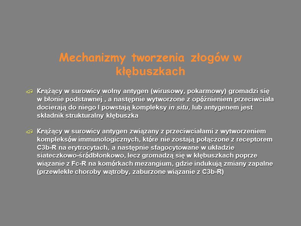 Lokalizacja ziarnistych złogów kompleksów immunologicznych / W mezangium (nefropatia IgA, SLE) / Wzdłuż wewnętrznej, podśródbłonkowej powierzchni ścian kapialr (SLE, meznagialno-rozplemowe kzn) / Wzdłuż zewnętrznej podnadbłonkowej powierzchni ścian kapilar (błoniaste kzn) / W mezangium (nefropatia IgA, SLE) / Wzdłuż wewnętrznej, podśródbłonkowej powierzchni ścian kapialr (SLE, meznagialno-rozplemowe kzn) / Wzdłuż zewnętrznej podnadbłonkowej powierzchni ścian kapilar (błoniaste kzn)