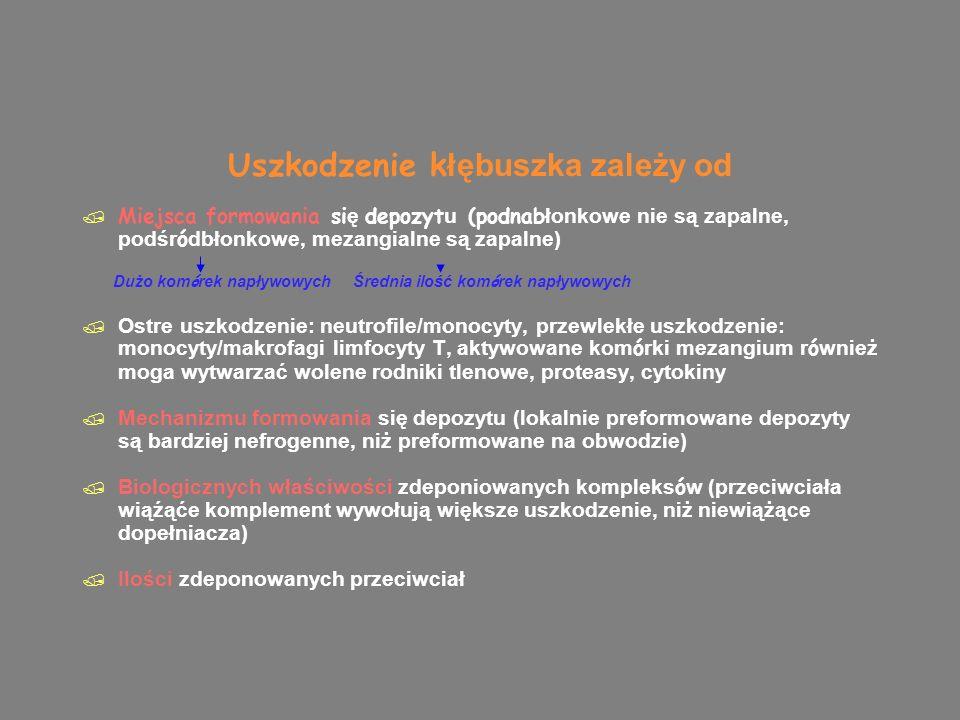 Dope łniacz  Droga klasyczna, zale żna od kompleksu, C1q wiąże się z fragmentem Fc: rozlane proliferacyjne w SLE, krioglobulinemia, b łoniasto-rozplemowe typ 1 (obniżone C3 i C4)  Droga alternatywna, niezależna od kompleksu immunologicznego, aktywacja C3 wyzwolona przez antygeny polisacharydowe, polimeryczna IgA,, uszkodzone kom ó rki, endotoksyny: nefropatia IgA (ale C3 I C4 zazwyczaj N), błoniasto-rozplemowe typ 2, popaciorkowcowe kzn: C3 obniżone, C4 N  Zależna od lektyny: rola w kzn nieznana  Droga klasyczna, zale żna od kompleksu, C1q wiąże się z fragmentem Fc: rozlane proliferacyjne w SLE, krioglobulinemia, b łoniasto-rozplemowe typ 1 (obniżone C3 i C4)  Droga alternatywna, niezależna od kompleksu immunologicznego, aktywacja C3 wyzwolona przez antygeny polisacharydowe, polimeryczna IgA,, uszkodzone kom ó rki, endotoksyny: nefropatia IgA (ale C3 I C4 zazwyczaj N), błoniasto-rozplemowe typ 2, popaciorkowcowe kzn: C3 obniżone, C4 N  Zależna od lektyny: rola w kzn nieznana