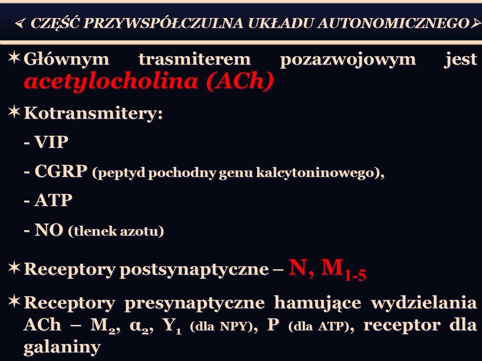  CZĘŚĆ PRZYWSPÓŁCZULNA UKŁADU AUTONOMICZNEGO   Głównym trasmiterem pozazwojowym jest acetylocholina (ACh)  Kotransmitery: - VIP - CGRP (peptyd pochodny genu kalcytoninowego), - ATP - NO (tlenek azotu)  Receptory postsynaptyczne – N, M 1-5  Receptory presynaptyczne hamujące wydzielania ACh – M 2, α 2, Y 1 (dla NPY), P (dla ATP), receptor dla galaniny  Głównym trasmiterem pozazwojowym jest acetylocholina (ACh)  Kotransmitery: - VIP - CGRP (peptyd pochodny genu kalcytoninowego), - ATP - NO (tlenek azotu)  Receptory postsynaptyczne – N, M 1-5  Receptory presynaptyczne hamujące wydzielania ACh – M 2, α 2, Y 1 (dla NPY), P (dla ATP), receptor dla galaniny
