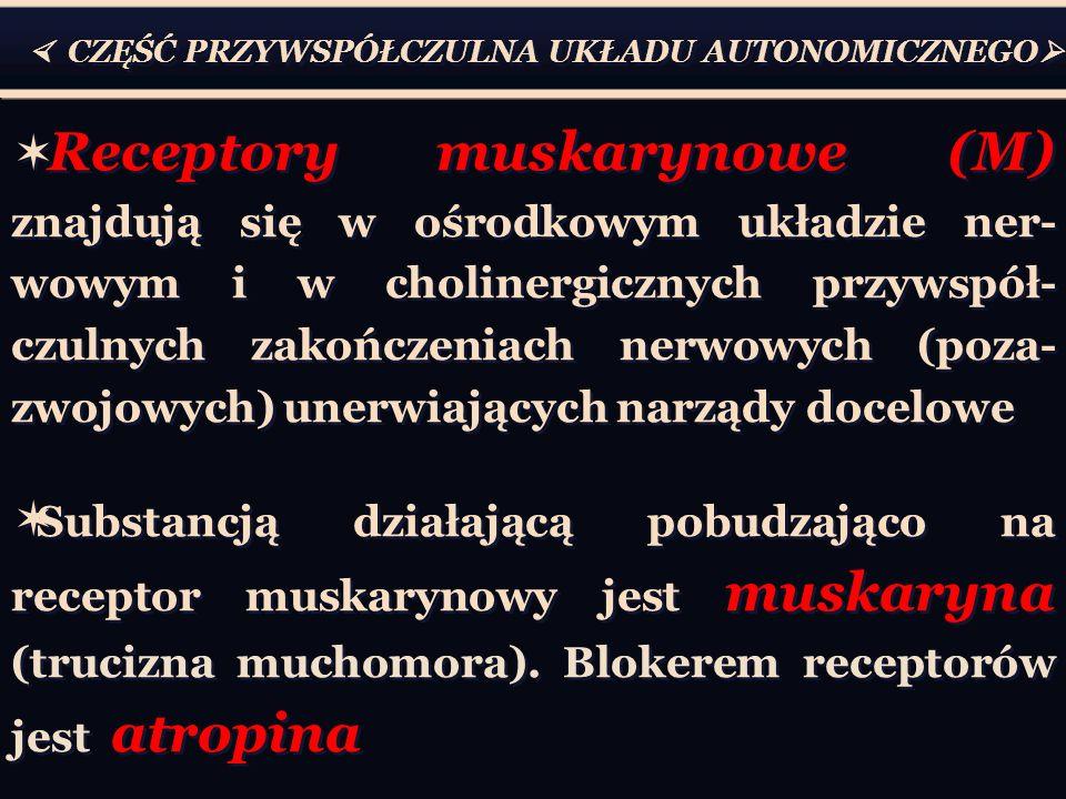  CZĘŚĆ PRZYWSPÓŁCZULNA UKŁADU AUTONOMICZNEGO   Receptory muskarynowe (M) znajdują się w ośrodkowym układzie ner- wowym i w cholinergicznych przywspół- czulnych zakończeniach nerwowych (poza- zwojowych) unerwiających narządy docelowe  Substancją działającą pobudzająco na receptor muskarynowy jest muskaryna (trucizna muchomora).