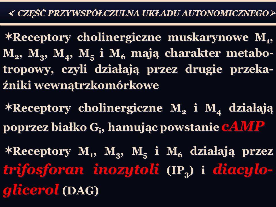  CZĘŚĆ PRZYWSPÓŁCZULNA UKŁADU AUTONOMICZNEGO   Receptory cholinergiczne muskarynowe M 1, M 2, M 3, M 4, M 5 i M 6 mają charakter metabo- tropowy, czyli działają przez drugie przeka- źniki wewnątrzkomórkowe  Receptory cholinergiczne M 2 i M 4 działają poprzez białko G i, hamując powstanie cAMP  Receptory M 1, M 3, M 5 i M 6 działają przez trifosforan inozytoli (IP 3 ) i diacylo- glicerol (DAG)  Receptory cholinergiczne muskarynowe M 1, M 2, M 3, M 4, M 5 i M 6 mają charakter metabo- tropowy, czyli działają przez drugie przeka- źniki wewnątrzkomórkowe  Receptory cholinergiczne M 2 i M 4 działają poprzez białko G i, hamując powstanie cAMP  Receptory M 1, M 3, M 5 i M 6 działają przez trifosforan inozytoli (IP 3 ) i diacylo- glicerol (DAG)