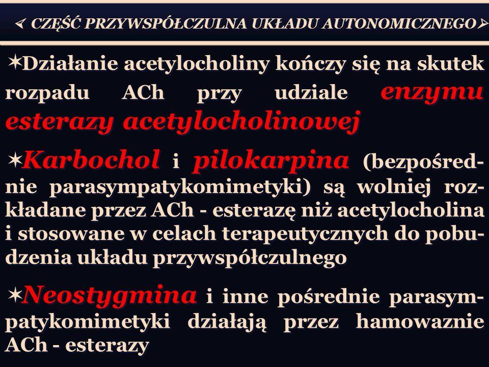  CZĘŚĆ PRZYWSPÓŁCZULNA UKŁADU AUTONOMICZNEGO   Działanie acetylocholiny kończy się na skutek rozpadu ACh przy udziale enzymu esterazy acetylocholinowej  Karbochol i pilokarpina (bezpośred- nie parasympatykomimetyki) są wolniej roz- kładane przez ACh - esterazę niż acetylocholina i stosowane w celach terapeutycznych do pobu- dzenia układu przywspółczulnego  Neostygmina i inne pośrednie parasym- patykomimetyki działają przez hamowaznie ACh - esterazy