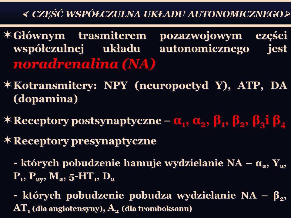  CZĘŚĆ WSPÓŁCZULNA UKŁADU AUTONOMICZNEGO   Głównym trasmiterem pozazwojowym części współczulnej układu autonomicznego jest noradrenalina (NA)  Kotransmitery: NPY (neuropoetyd Y), ATP, DA (dopamina)  Receptory postsynaptyczne – α 1, α 2, β 1, β 2, β 3 i β 4  Receptory presynaptyczne - których pobudzenie hamuje wydzielanie NA – α 2, Y 2, P 1, P 2y, M 2, 5-HT 1, D 2 - których pobudzenie pobudza wydzielanie NA – β 2, AT 1 (dla angiotensyny), A 2 (dla tromboksanu)  Głównym trasmiterem pozazwojowym części współczulnej układu autonomicznego jest noradrenalina (NA)  Kotransmitery: NPY (neuropoetyd Y), ATP, DA (dopamina)  Receptory postsynaptyczne – α 1, α 2, β 1, β 2, β 3 i β 4  Receptory presynaptyczne - których pobudzenie hamuje wydzielanie NA – α 2, Y 2, P 1, P 2y, M 2, 5-HT 1, D 2 - których pobudzenie pobudza wydzielanie NA – β 2, AT 1 (dla angiotensyny), A 2 (dla tromboksanu)