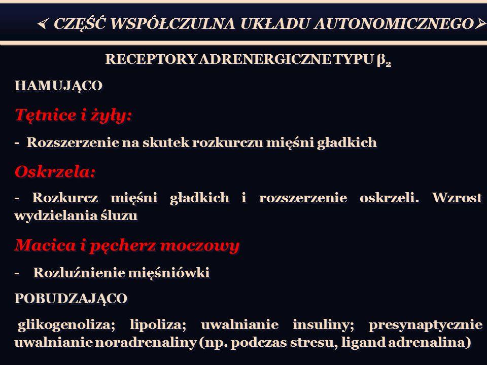  CZĘŚĆ WSPÓŁCZULNA UKŁADU AUTONOMICZNEGO  RECEPTORY ADRENERGICZNE TYPU β 2 HAMUJĄCO Tętnice i żyły: - Rozszerzenie na skutek rozkurczu mięśni gładkich Oskrzela: - Rozkurcz mięśni gładkich i rozszerzenie oskrzeli.