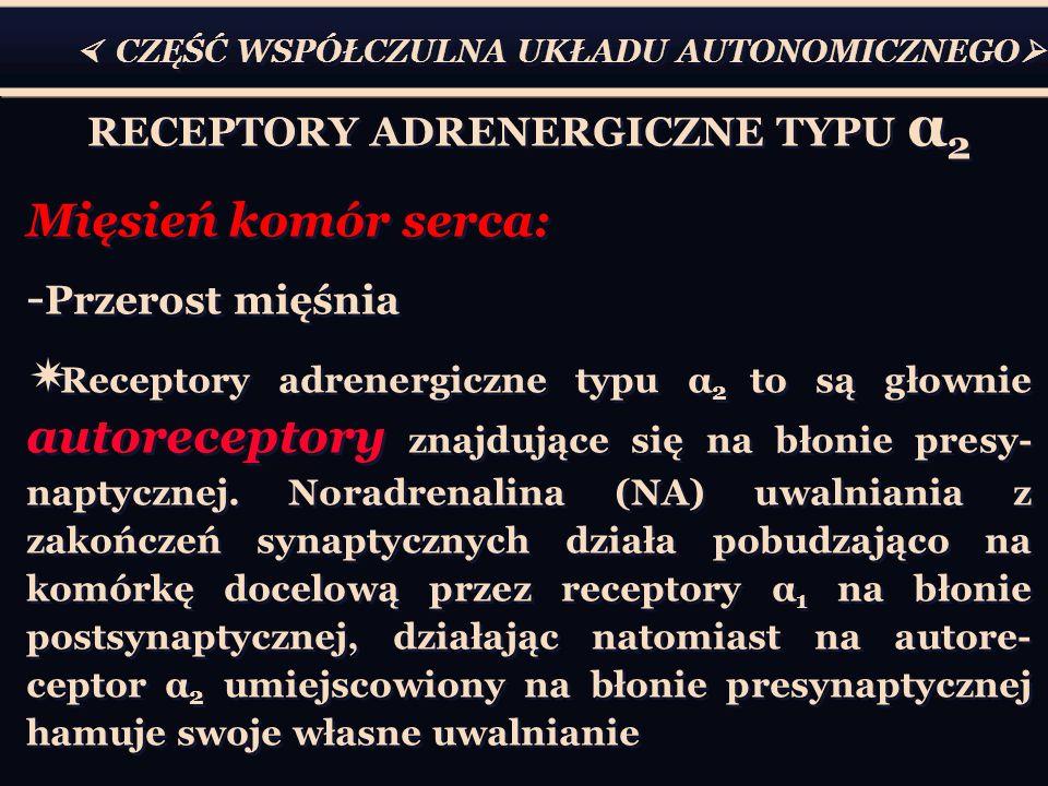  CZĘŚĆ WSPÓŁCZULNA UKŁADU AUTONOMICZNEGO  RECEPTORY ADRENERGICZNE TYPU α 2 Mięsień komór serca: - Przerost mięśnia  Receptory adrenergiczne typu α 2 to są głownie autoreceptory znajdujące się na błonie presy- naptycznej.