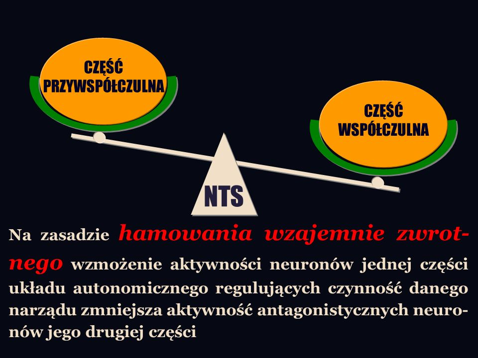 Na zasadzie hamowania wzajemnie zwrot- nego wzmożenie aktywności neuronów jednej części układu autonomicznego regulujących czynność danego narządu zmniejsza aktywność antagonistycznych neuro- nów jego drugiej części NTS CZĘŚĆ PRZYWSPÓŁCZULNA CZĘŚĆ WSPÓŁCZULNA