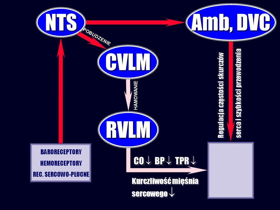 Regulacja częstości skurczów serca i szybkości przewodzenia Regulacja częstości skurczów serca i szybkości przewodzenia CVLM NTS RVLM BARORECEPTORY HEMORECEPTORY REC.