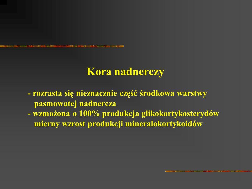 Kora nadnerczy - rozrasta się nieznacznie część środkowa warstwy pasmowatej nadnercza - wzmożona o 100% produkcja glikokortykosterydów mierny wzrost p
