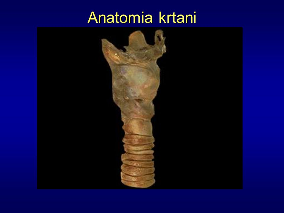Kość gnykowa Błona tarczowo-gnykowa Chrząstka tarczowata Więzadło pierścienno-tarczowe Chrząstka pierścieniowata Chrząstki tchawicy Anatomia krtani
