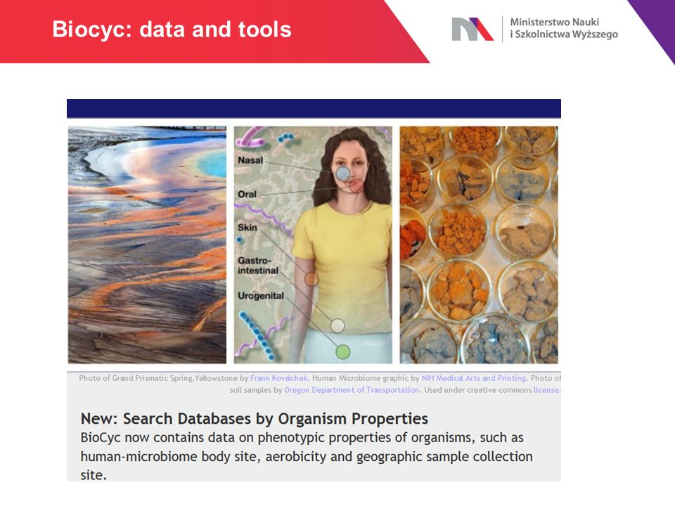 Biocyc: data and tools