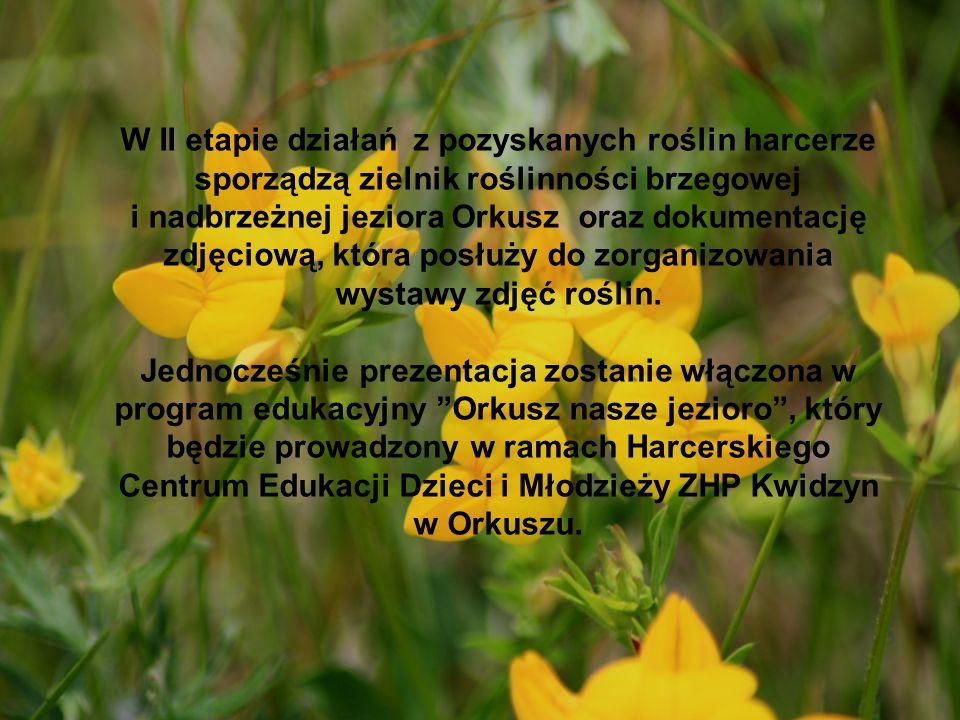 W II etapie działań z pozyskanych roślin harcerze sporządzą zielnik roślinności brzegowej i nadbrzeżnej jeziora Orkusz oraz dokumentację zdjęciową, kt
