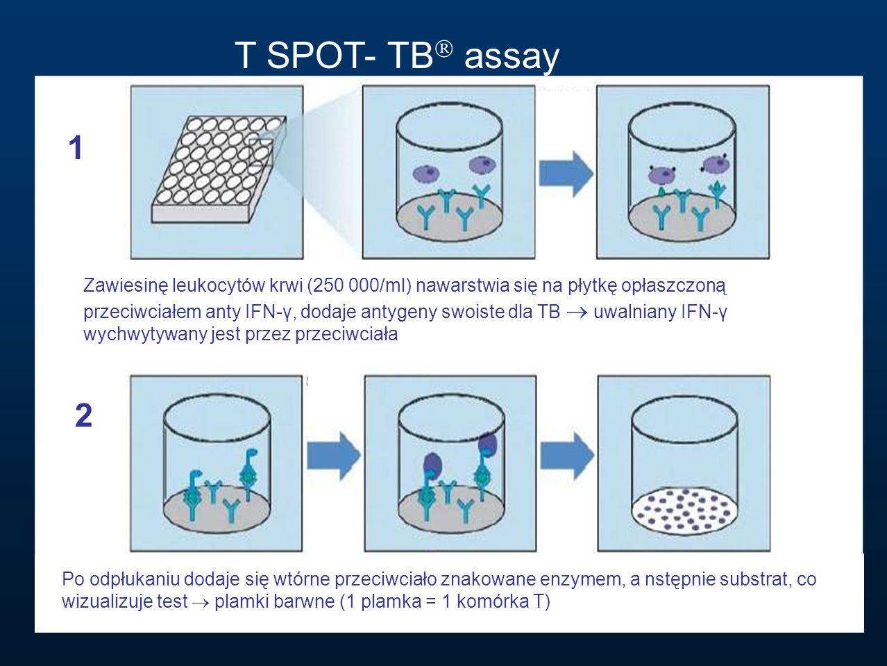 T SPOT- TB  assay 1 2 Zawiesinę leukocytów krwi (250 000/ml) nawarstwia się na płytkę opłaszczoną przeciwciałem anty IFN-γ, dodaje antygeny swoiste d