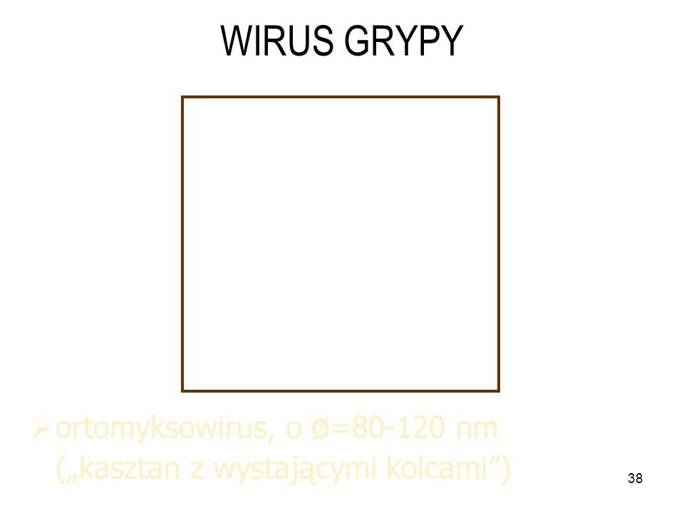 """38 WIRUS GRYPY  ortomyksowirus, o ø =80-120 nm (""""kasztan z wystającymi kolcami )"""