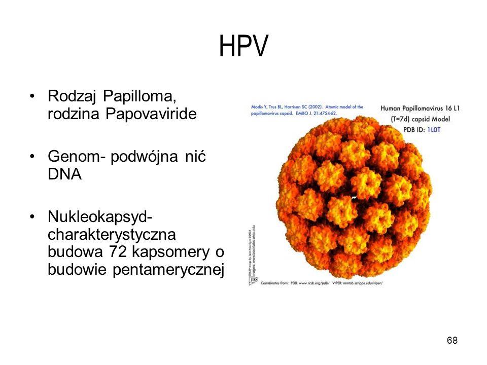 68 HPV Rodzaj Papilloma, rodzina Papovaviride Genom- podwójna nić DNA Nukleokapsyd- charakterystyczna budowa 72 kapsomery o budowie pentamerycznej