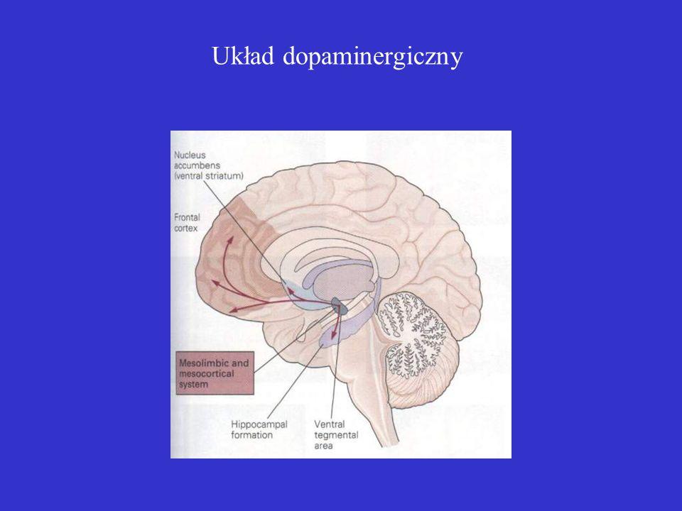 Układ dopaminergiczny