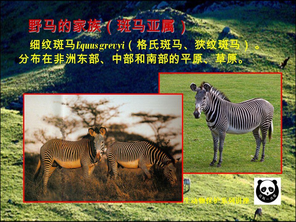细纹斑马 Equus grevyi (格氏斑马、狭纹斑马) 。 分布在非洲东部、中部和南部的平原、草原。 野马的家族(斑马亚属) 野生动物保护系列讲座