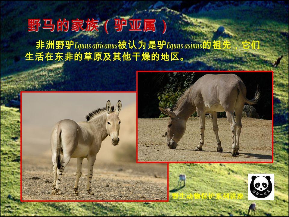 非洲野驴 Equus africanus 被认为是驴 Equus asinus 的祖先,它们 生活在东非的草原及其他干燥的地区。 野马的家族(驴亚属) 野生动物保护系列讲座