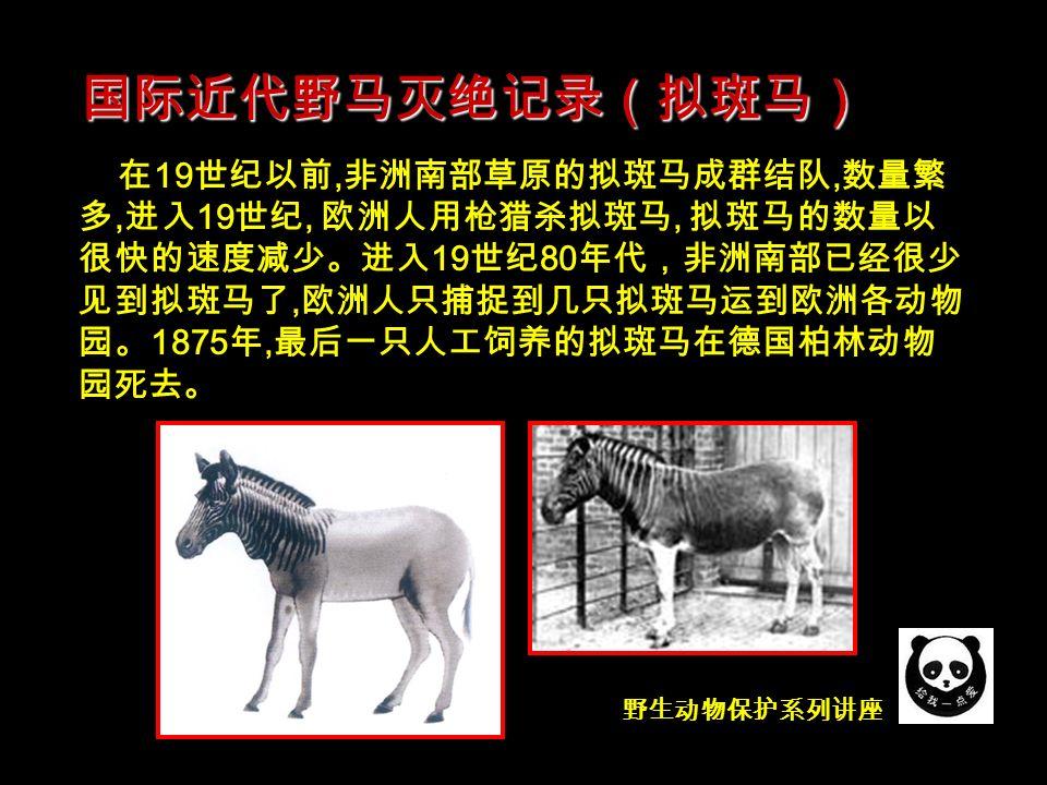 野生动物保护系列讲座 在 19 世纪以前, 非洲南部草原的拟斑马成群结队, 数量繁 多, 进入 19 世纪, 欧洲人用枪猎杀拟斑马, 拟斑马的数量以 很快的速度减少。进入 19 世纪 80 年代,非洲南部已经很少 见到拟斑马了, 欧洲人只捕捉到几只拟斑马运到欧洲各动物 园。 1875 年, 最后一只人工饲养的拟斑马在德国柏林动物 园死去。 国际近代野马灭绝记录(拟斑马)
