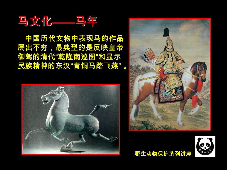 马的形态特征和结构
