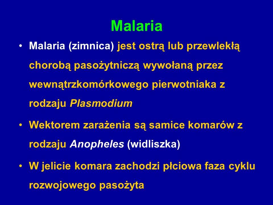Malaria Malaria (zimnica) jest ostrą lub przewlekłą chorobą pasożytniczą wywołaną przez wewnątrzkomórkowego pierwotniaka z rodzaju Plasmodium Wektorem zarażenia są samice komarów z rodzaju Anopheles (widliszka) W jelicie komara zachodzi płciowa faza cyklu rozwojowego pasożyta