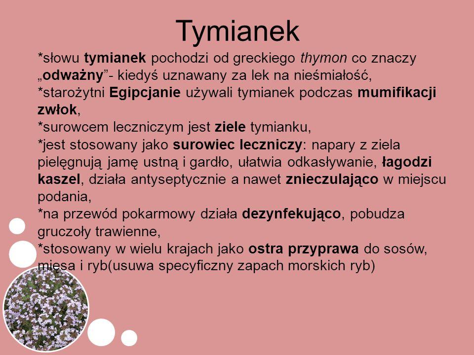 """Tymianek *słowu tymianek pochodzi od greckiego thymon co znaczy """"odważny""""- kiedyś uznawany za lek na nieśmiałość, *starożytni Egipcjanie używali tymia"""