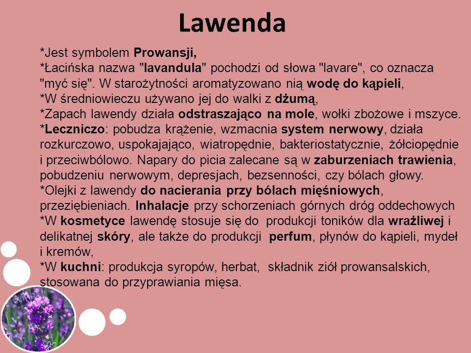 Lawenda *Jest symbolem Prowansji, *Łacińska nazwa
