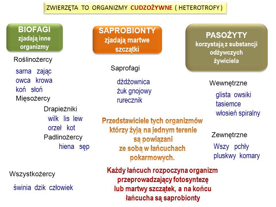 ZWIERZĘTA TO ORGANIZMY CUDZOŻYWNE ( HETEROTROFY ) ZWIERZĘTA TO ORGANIZMY CUDZOŻYWNE ( HETEROTROFY ) BIOFAGI zjadają inne organizmy BIOFAGI zjadają inn