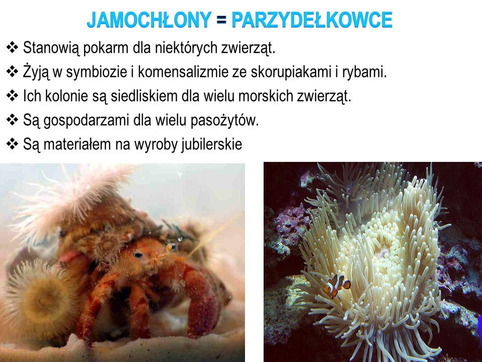  Stanowią pokarm dla niektórych zwierząt.  Żyją w symbiozie i komensalizmie ze skorupiakami i rybami.  Ich kolonie są siedliskiem dla wielu morskic
