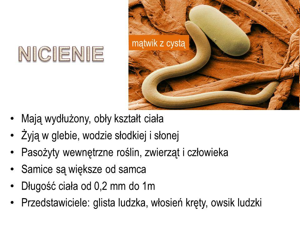 Mają wydłużony, obły kształt ciała Żyją w glebie, wodzie słodkiej i słonej Pasożyty wewnętrzne roślin, zwierząt i człowieka Samice są większe od samca