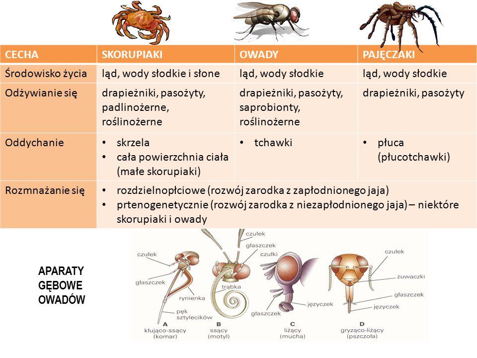 CECHASKORUPIAKIOWADYPAJĘCZAKI Środowisko życialąd, wody słodkie i słoneląd, wody słodkie Odżywianie siędrapieżniki, pasożyty, padlinożerne, roślinożer