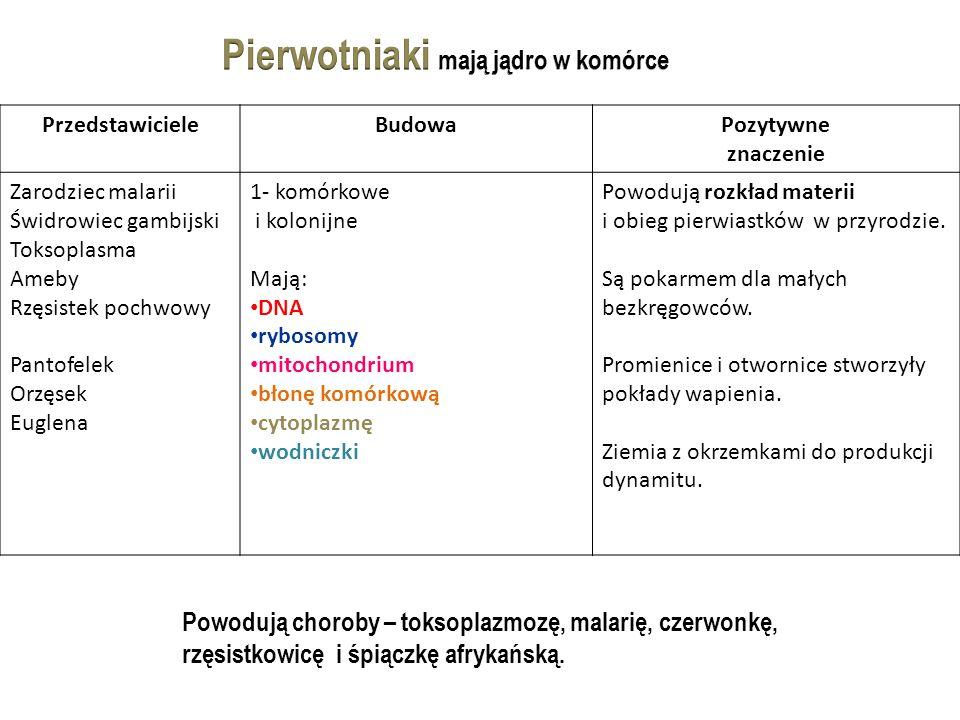 PrzedstawicieleBudowaPozytywne znaczenie Zarodziec malarii Świdrowiec gambijski Toksoplasma Ameby Rzęsistek pochwowy Pantofelek Orzęsek Euglena 1- komórkowe i kolonijne Mają: DNA rybosomy mitochondrium błonę komórkową cytoplazmę wodniczki Powodują rozkład materii i obieg pierwiastków w przyrodzie.