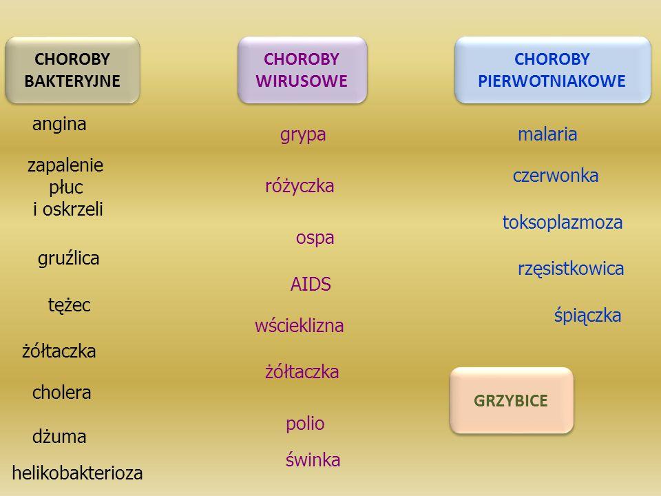 CHOROBY BAKTERYJNE CHOROBY BAKTERYJNE CHOROBY WIRUSOWE CHOROBY WIRUSOWE CHOROBY PIERWOTNIAKOWE CHOROBY PIERWOTNIAKOWE grypa angina zapalenie płuc i oskrzeli gruźlica ospa różyczka wścieklizna AIDS malaria toksoplazmoza czerwonka rzęsistkowica tężec żółtaczka helikobakterioza dżuma cholera GRZYBICE polio śpiączka świnka