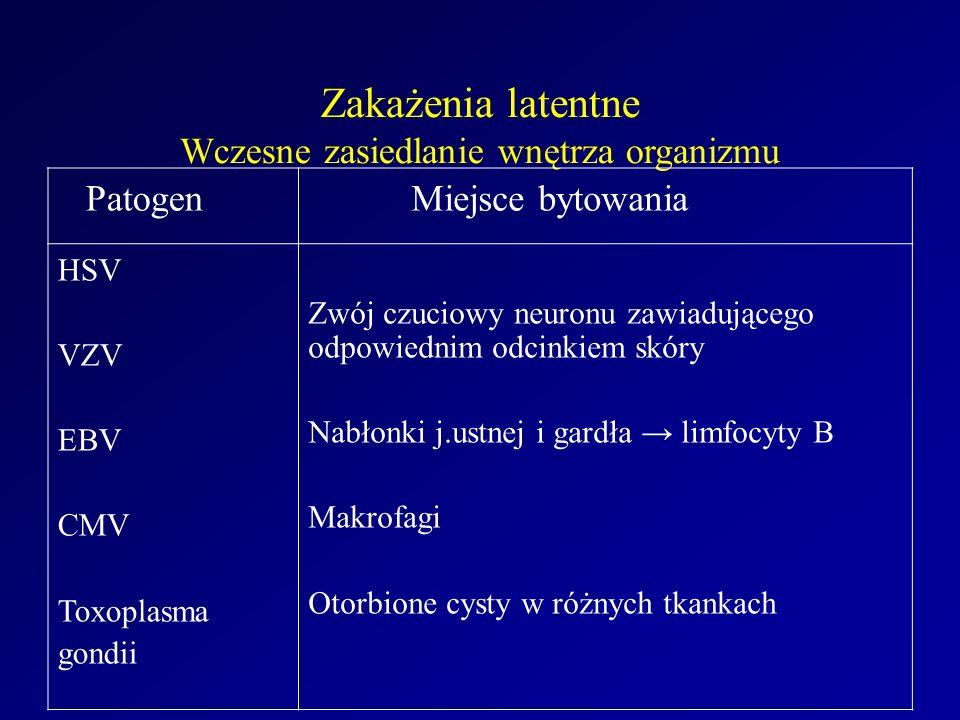 Zakażenia latentne Wczesne zasiedlanie wnętrza organizmu Patogen Miejsce bytowania HSV VZV EBV CMV Toxoplasma gondii Zwój czuciowy neuronu zawiadującego odpowiednim odcinkiem skóry Nabłonki j.ustnej i gardła → limfocyty B Makrofagi Otorbione cysty w różnych tkankach