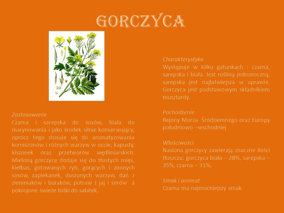 Gorczyca Charakterystyka Występuje w kilku gatunkach : czarna, sarepska i biała. Jest rośliną jednoroczną, sarepska jest najłatwiejsza w uprawie. Gorc