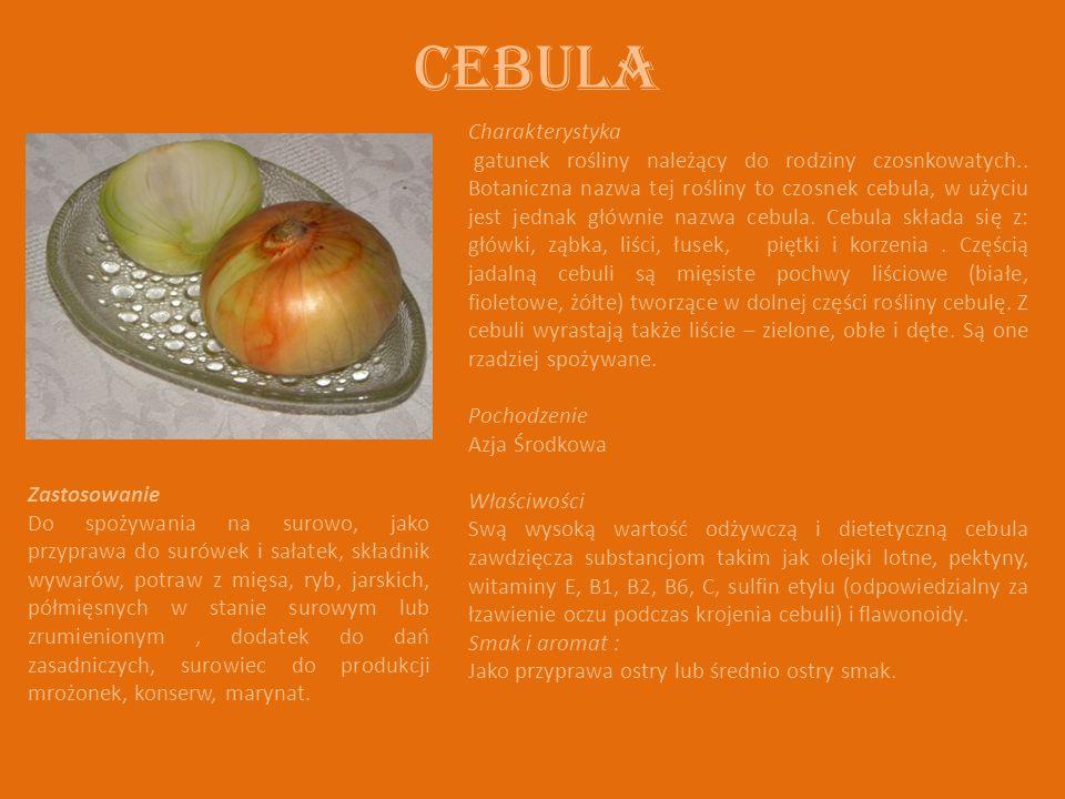 Cebula Charakterystyka gatunek rośliny należący do rodziny czosnkowatych..