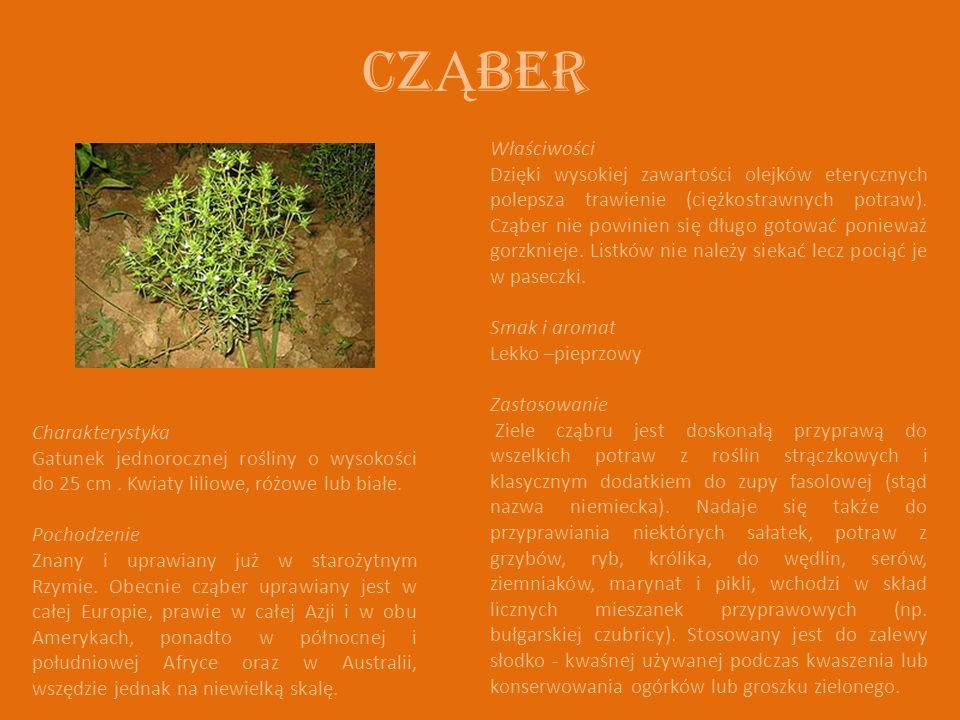 CZ Ą BER Charakterystyka Gatunek jednorocznej rośliny o wysokości do 25 cm.