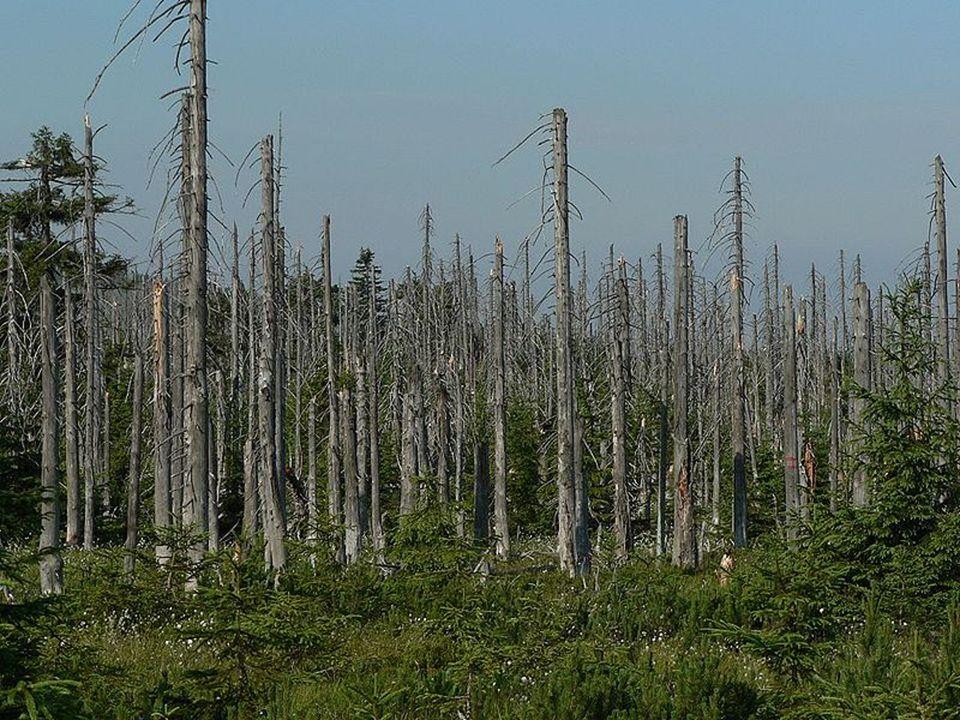 Negatywny wpływ na przyrodę… Kwaśne deszcze zasilając jeziora i rzeki, przenoszą truciznę dalej, zabijając po drodze wszelkie mikroorganizmy. Powodują