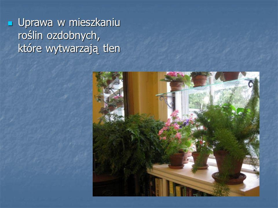 Uprawa w mieszkaniu roślin ozdobnych, które wytwarzają tlen Uprawa w mieszkaniu roślin ozdobnych, które wytwarzają tlen