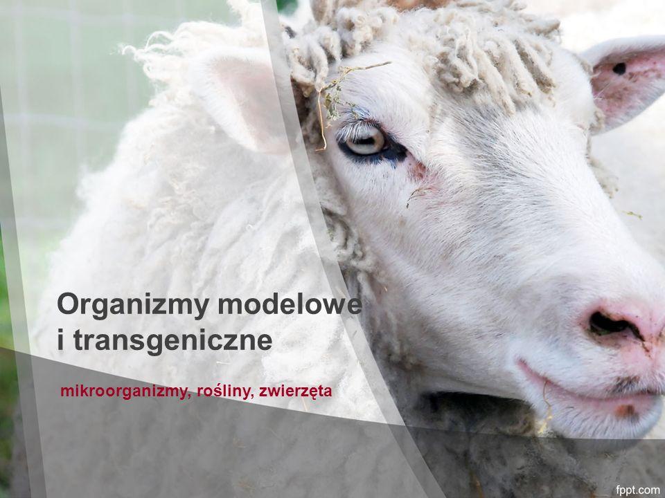Organizmy modelowe i transgeniczne mikroorganizmy, rośliny, zwierzęta
