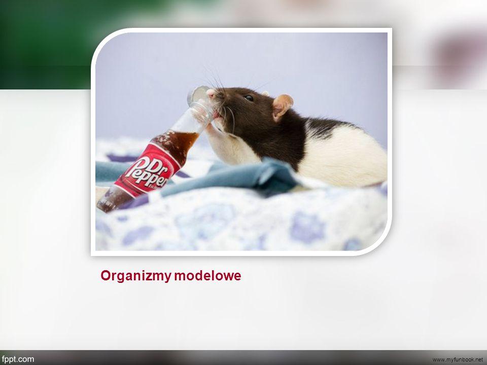 Co to jest organizm modelowy.