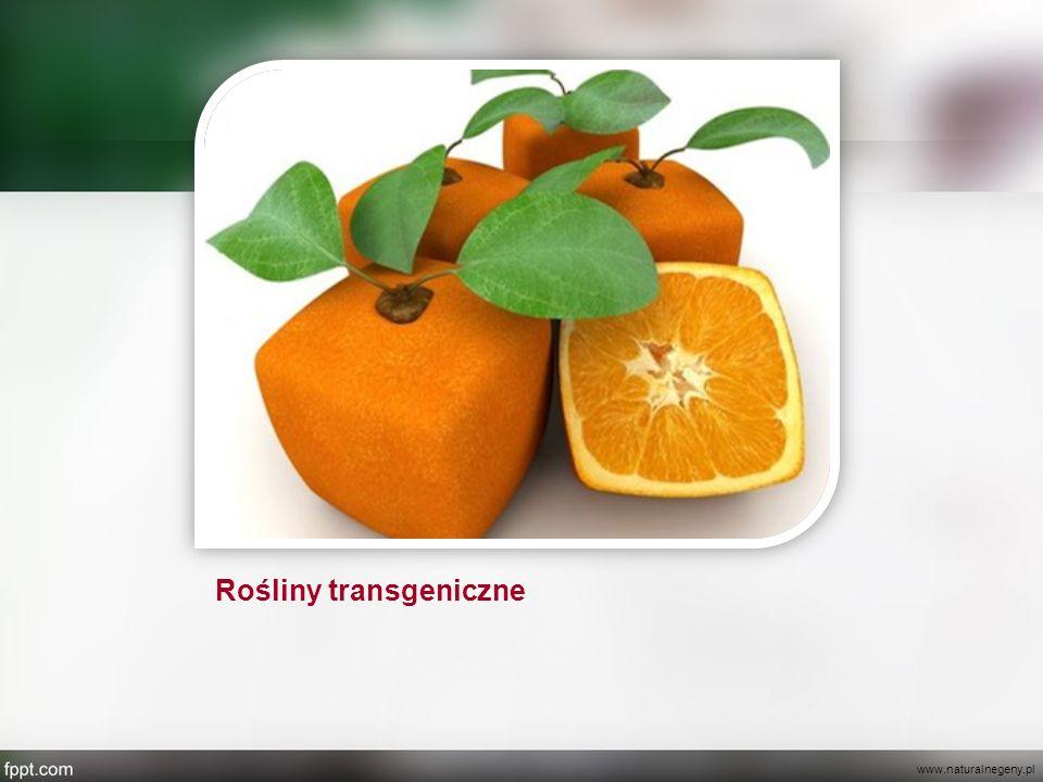 Rośliny transgeniczne www.naturalnegeny.pl