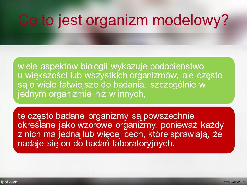 Mikroorganizmy transgeniczne www.sciencedaily.com