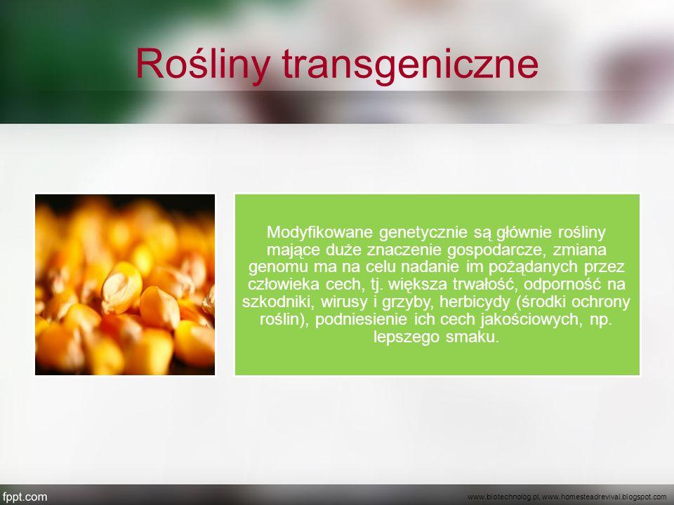 Rośliny transgeniczne Modyfikowane genetycznie są głównie rośliny mające duże znaczenie gospodarcze, zmiana genomu ma na celu nadanie im pożądanych pr